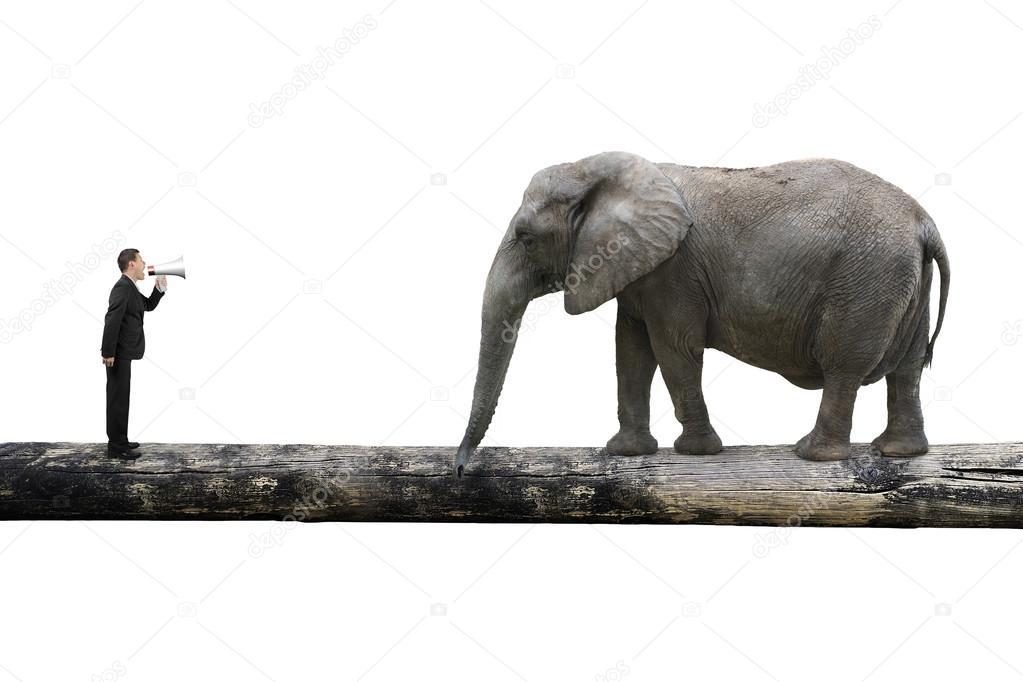 Звук крик слона скачать