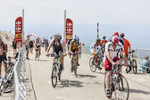 Amateur Cyclists on Mount Ventoux — Stock Photo