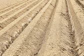 Furrows Abstract — Stock Photo