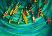 Koi fishes — Stock Photo