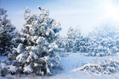 Cold day in the snowy winter forest — Stock Photo