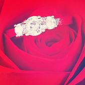Diamond ring in Red rose — Stock Photo