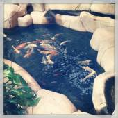 Fish pond with fish — Foto de Stock