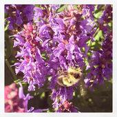 Красивые фиолетовые цветы — Стоковое фото