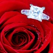 Diamond ring in Red rose — Stok fotoğraf #53031987