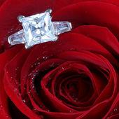 花の場合でダイヤモンド — ストック写真