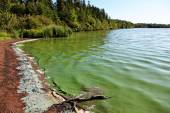 Lake with Algae in the water — Stock Photo