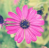 Pink flower — Stock Photo