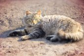 Adorable cat lying on ground — Stock Photo