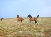 Alanında üç at — Stok fotoğraf
