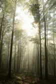 Sunrise in the early autumn deciduous forest — Stock Photo