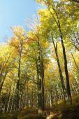 Autumn beech forest — Stock Photo