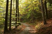 Picturesque autumn forest — Stock Photo
