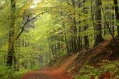 Trail through the autumnal forest — Stock Photo