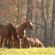 Horse in the meadow — Stock Photo #58280267