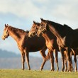 Horses in the morning — Stock Photo #60763287