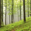 Spring beech forest — Stock Photo #72926867