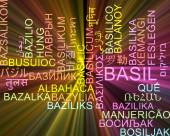 Basil multilanguage wordcloud background concept glowing — Stock Photo