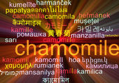 Chamomile multilanguage wordcloud background concept glowing — Stock Photo
