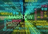 Ardore di concetto di midollo multilingua wordcloud sfondo — Foto Stock