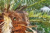 Argentina Parrot nest — Stock Photo
