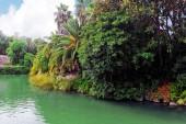 Humid tropical jungle. — Stock Photo