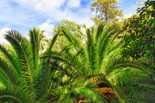 Humid tropical jungle. — Stock Photo