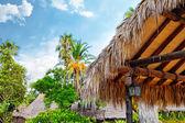 Humid tropical jungle — Stock Photo