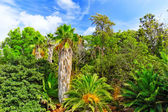 Humid tropical jungle — Stock Photo