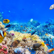 Underwater world with corals and tropical fish. — Stok fotoğraf #67912471