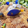 Underwater world with corals and tropical fish. — Stok fotoğraf #67912477