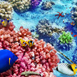 Underwater world with corals and tropical fish. — Stok fotoğraf #67912503