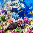 Underwater world with corals and tropical fish. — Stok fotoğraf #67912507