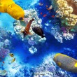 Underwater world with corals and tropical fish. — Stok fotoğraf #67912527