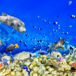 Underwater world with corals and tropical fish. — Stok fotoğraf #68555913
