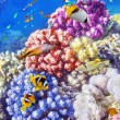 Underwater world with corals and tropical fish. — Stok fotoğraf #68555917