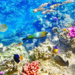 Underwater world with corals and tropical fish. — Stok fotoğraf #68555923