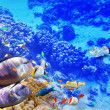 Underwater world with corals and tropical fish. — Stok fotoğraf #68555983