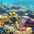 Underwater world with corals and tropical fish. — Stok fotoğraf #71061165