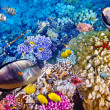Underwater world with corals and tropical fish. — Stock Photo #71061197