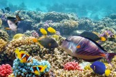 Underwater world with corals and tropical fish. — Fotografia Stock