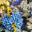 Underwater world with corals and tropical fish. — Stock Photo #71254111