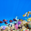 Underwater world with corals and tropical fish. — Stok fotoğraf #71254115