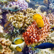 Underwater world with corals and tropical fish. — Stok fotoğraf #71254121