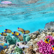 Underwater world with corals and tropical fish. — Stock Photo #71254137
