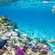 Underwater world with corals and tropical fish. — Stok fotoğraf #71574815