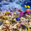 Underwater world with corals and tropical fish. — Stock Photo #71574837