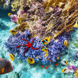 Underwater world with corals and tropical fish. — Stock Photo #71574897