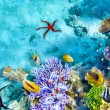 Underwater world with corals and tropical fish. — Stok fotoğraf #71574917