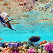 Underwater world with corals and tropical fish. — Stok fotoğraf #71575017